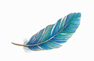 Feather in pen & ink and Inktense pencil on Stonehenge paper